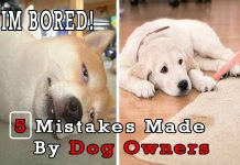 5 Mistakes Made By Dog Owners