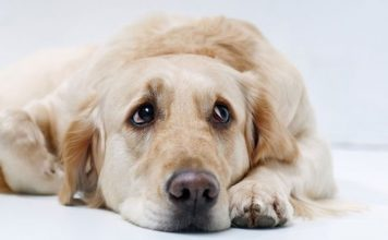 6 Natural Remedies for Dog Anxiety