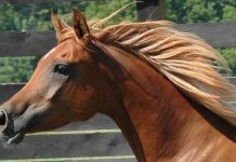 How to Get and Maintain an Amazing Mane of Your Horse