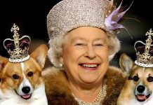 The 8 richest dogs of The planet1