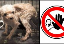 These 10 Shocking Things Done to Dogs Need to be Banned