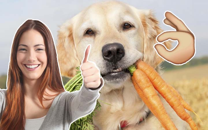 Top 10 Healthy Human Foods You Need To Feed Your Dog