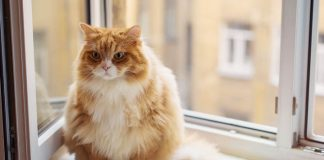 What Are the Risks of Cat Obesity
