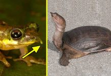 8 Strange Animals You Will Not Believe They Already Exist1