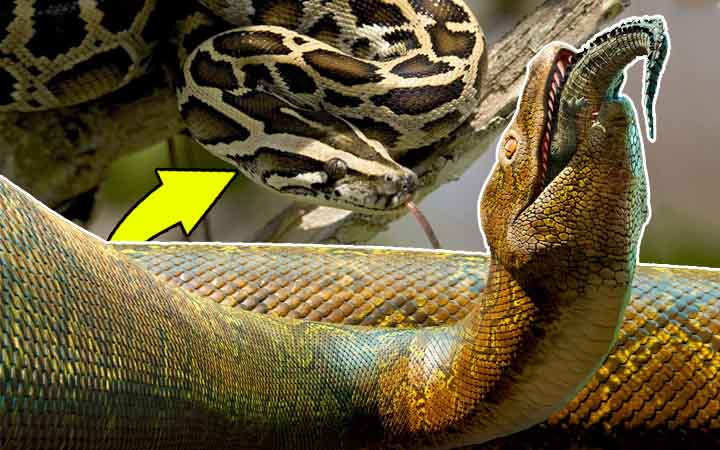 Meet the 5 Largest Snakes in the World