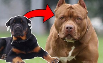 The 10 Most Ferocious Dog Breeds In the World