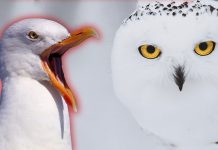 Top 10 Most Dangerous Birds in the World That May Kill You