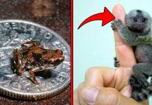 Top 10 Super Tiny Animals in the World You Won't Believe they Exist