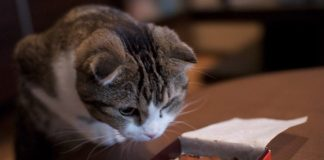 10 Harmful Home Items That Are The Most Dangerous To Your Pet