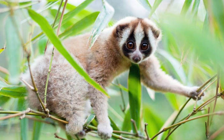 10 Of The Cutest Animals That Can Actually Kill You