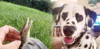 5 Heart-melting Pictures that Will Instantly Make You Happy
