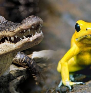 The Most Dangerous Animals In The World