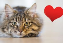 10 Cute And Lovely Ways Your Cat Says I Love You